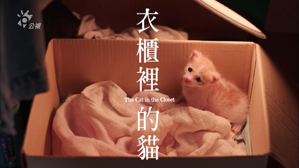 衣櫃裡的貓