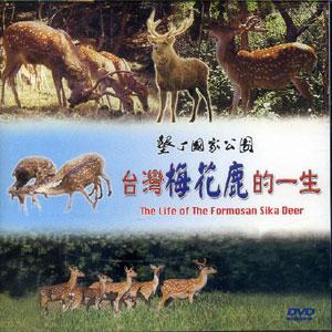 台灣梅花鹿的一生